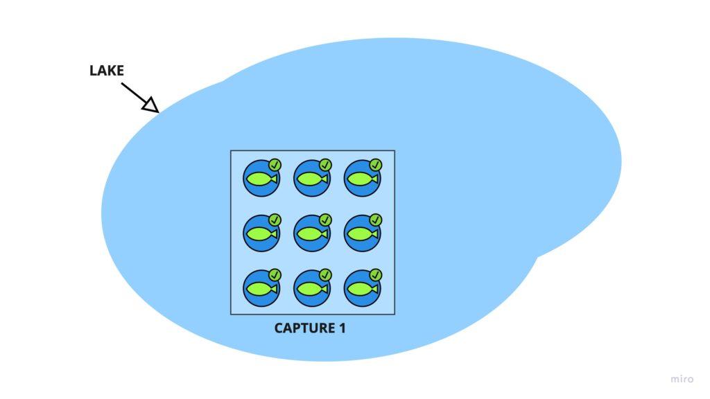 Catch Recatch Step 1