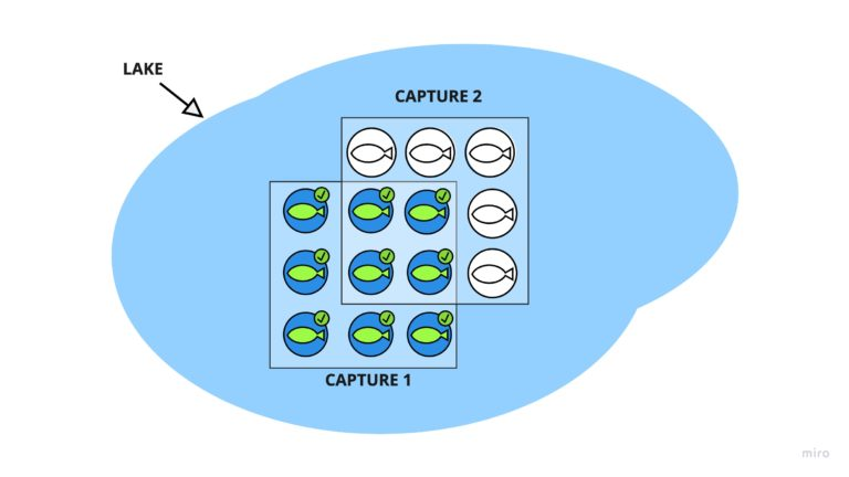 Illustration of the overlap between caught and marked fish, and a second capture of fish where some previously marked fish apear